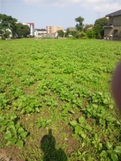 宇奈根ひまわり畑